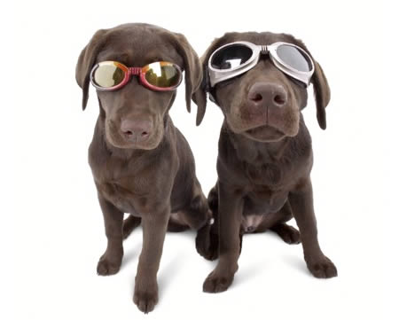 a97180_g119_1-doggles