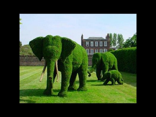 Elephant-Bushes